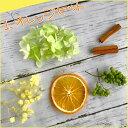ハーバリウム フルーツ 花材セット オレンジ イチゴ ドラゴ...