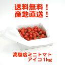 高糖度ミニトマト アイコ 1kg 送料無料 とまおとめ