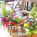 【送料無料】クリスマスのおまかせ寄せ植え(スクエアウッドボッ...