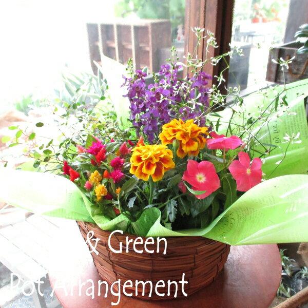 送料無料季節のおまかせポットアレンジメント山草いぐさバスケット寄せ鉢薫る花花フラワー鉢植え寄せ植え寄