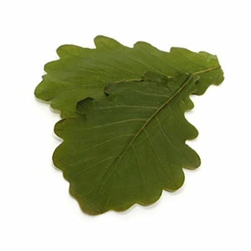 柏の葉 塩漬 かしわの葉 50枚 【常温】