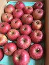山形産りんご ふじりんご 健康くだもの 約5キロ(20玉