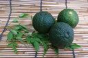 徳島県産 青柚子(1個入り)Mサイズ