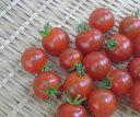 北海道産 ミニトマト【1pk】