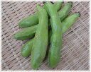 鹿児島県産 そら豆(2キロ)
