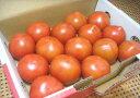 静岡県産アメーラトマト(1箱)