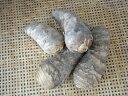 静岡県産 海老芋 1kg(Sサイズ 7ー9本)