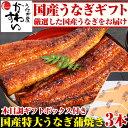 \国産うなぎギフト/国産特大うなぎ蒲焼き 170g×3本セット 送料無料 国産 ウナギ 鰻