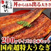\今年は7月20日 夏の土用丑/超特大うなぎ蒲焼き 200g×3本セット【ウナギ 鰻 国産 贈り物 誕生日 お祝い 内祝い ギフト 高級 魚介】