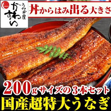 \贈り物にも大人気/超特大うなぎ蒲焼き 200g×3本セット【ウナギ 鰻 国産 贈り物 誕生日 お祝い 内祝い ギフト 高級 魚介】