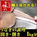うなぎの調理 1キロ分【送料別】【捌き 開き さばき ひらき 鰻 生きたうなぎ 活鰻】