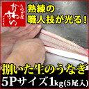 捌いた国産うなぎ 5Pサイズ1kg 【送料別】【ウナギ 鰻 生 調理済み ひらき 業務用】