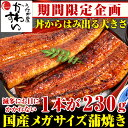 \期間限定特別企画/メガサイズ国産うなぎ蒲焼き 230g×1本【ウナギ 鰻 蒲焼き 国産