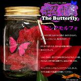 【在庫アリ】【送料380】凄すぎて笑っちゃう!本物の蝶を越えた美しき躍動★ 超蝶 (ちょうちょう)- ピンクモルフォ -the Wonder Butterfly【 誕生日 プレゼントに】【RCP】