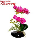 卓上型胡蝶蘭 奏(かなで) ピンク(1コ入)【永光】...