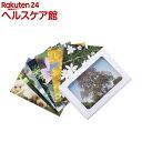 Healing Herbs フラワーカード(40枚入)【HealingHerbs(ヒーリングハーブス)】