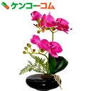 卓上型胡蝶蘭 奏(かなで) ピンク[永光 光触媒消臭]