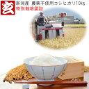 新米 10kg 送料無料 無農薬 玄米 新潟産 無農薬栽培コシヒカリ 生産者:辻勉 (農薬不使用)