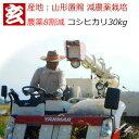 新米 減農薬 玄米 30kg 送料無料 農薬8割減・化学肥料...