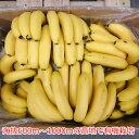 オーガニックバナナ/1箱 11kg(目安60本以上)【メーカー直送】 【代引き不可】