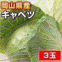 【岡山県産】 キャベツ ★ 3 玉 ★