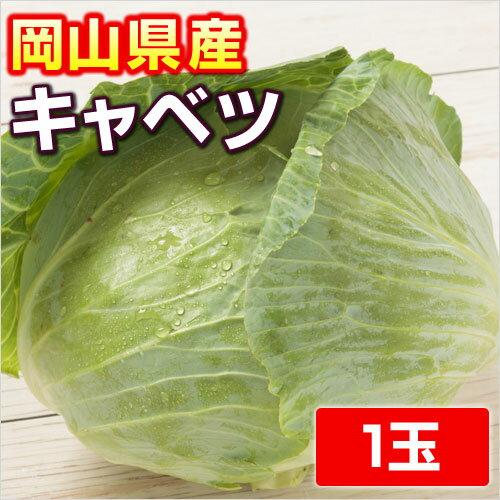 【岡山県産】 キャベツ...:kibi:10000529