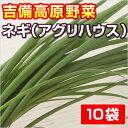 ネギ 【吉備高原アグリハウス】 ■ 10P ■