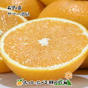 希望の島 サマー清見 10kg 贈答用 中玉 愛媛 中島産星タンゴール 輝き(かがやき)タンゴール 清見オレンジの枝変わり