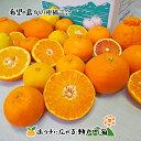 【訳あり】希望の島 旬の柑橘詰合せ 10kgみかん 中島まど...