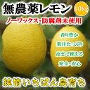 【送料無料】無農薬レモン 国産レモン 愛媛・中島産 10kg【あす楽】【希望の島 ユーレ