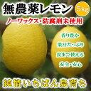 【送料無料】無農薬レモン 国産レモン 愛媛・中島産 5kg【あす楽】【希望の島 ユーレ