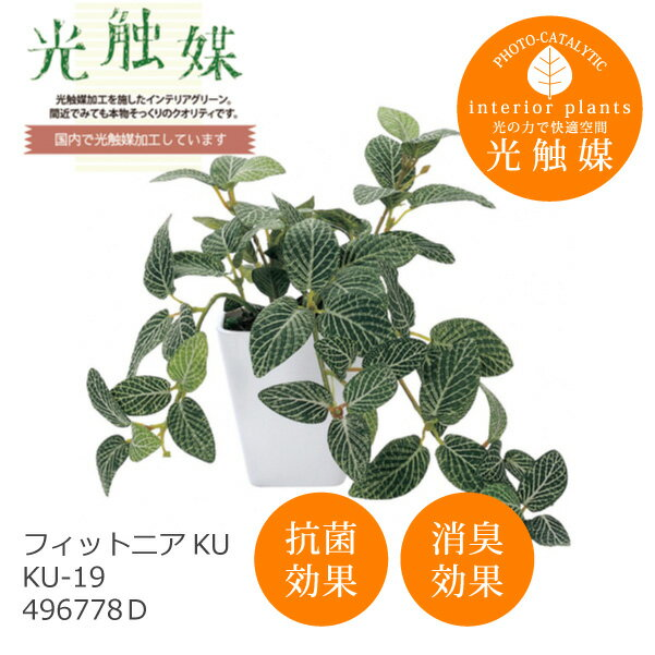 あす楽 光触媒 インテリアグリーン フィットニア KU KU-19 496778D 造花 観葉植物 人工