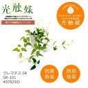 あす楽 光触媒 インテリアグリーン クレマチスSR SR-101 497829D 造花 観葉植物 人工