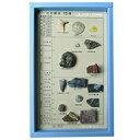 化石コレクション15種