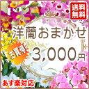 【父の日】洋蘭おまかせ3,000円ファレノプシス(胡蝶蘭)ミ...