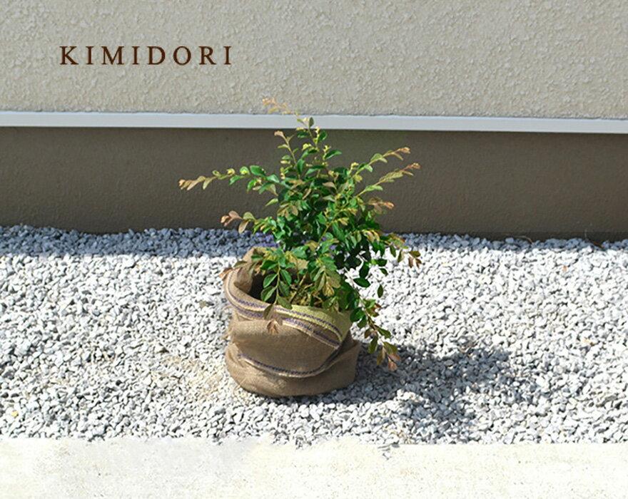 トキワマンサク約30cm1本緑葉白花低木おしゃれガーデニング植木庭木苗苗木観葉植物常葉マンサクマンサ
