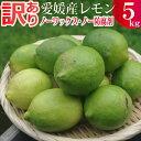 愛媛産訳ありグリーンレモン5キロ