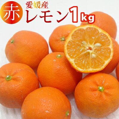 見た目はみかん、味はしっかりレモン!愛媛産赤レモン小玉1kg