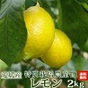 愛媛県産特別栽培レモン2kg ※北海道沖縄送料別途 ノーワックス・ノー防腐剤 ワックス