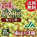 【送料無料】<梅干し用>紀州産小梅(2Lサイズ) 4kg×3...