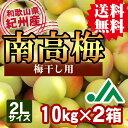 【送料無料】紀州産南高梅(2Lサイズ) 10kg×2箱 ★和歌山県の農協JA紀南より安全安心な青梅をお届けします♪
