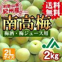 【送料無料】<梅酒用・梅ジュース用>紀州産南高梅(2Lサイズ) 2kg 【インターネッ