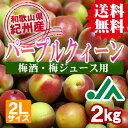 【送料無料】<梅酒用・梅ジュース用>パープルクィーン(2Lサイズ) 2kg 【インター