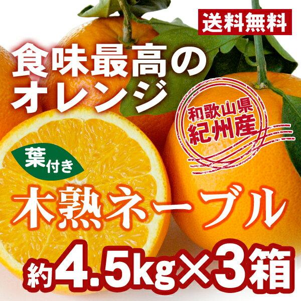 【送料無料】木熟ネーブル 約4.5kg(18玉入...の商品画像