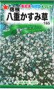 【代引不可】【5袋まで送料80円】 □宿根八重かすみ草
