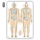 下敷き 骨 靱帯 関節 「骨と関節まるわかりシート」 A4サイズ 両面カラー プラスチック素材 暗記シート 送料無料 キャンペーン