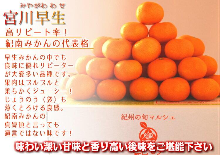 みかん 10kg 送料無料 高糖度小粒みかん宮...の紹介画像3