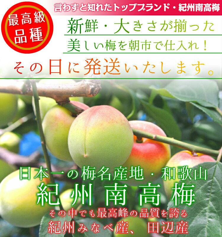 ◆南高梅 完熟【送料無料】【秀品 2L サイズ...の紹介画像2