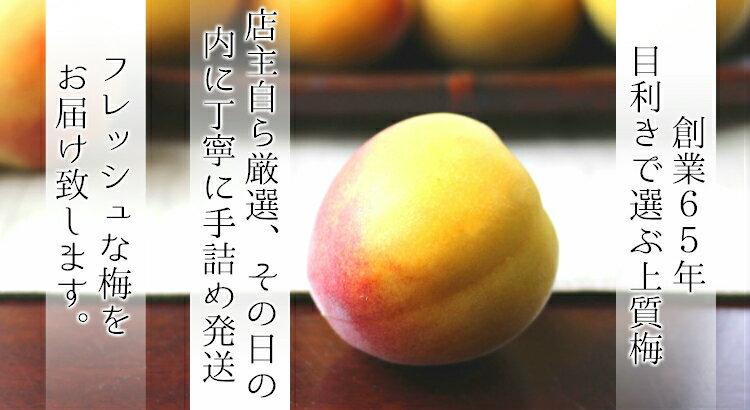 ◆南高梅 完熟【送料無料】【秀品 2L サイズ...の紹介画像3