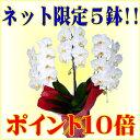 �y�|�C���g10�{�z���y�V1�ʁ��Ӓ���/1��5������i/�Ӓ��������3�{����/�Ӓ���/�R�`���E����/��